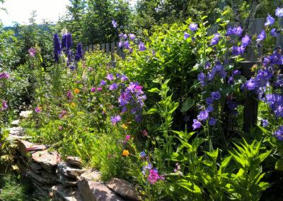 Blumen bei Urlaub am Bauernhof Grabenhofer