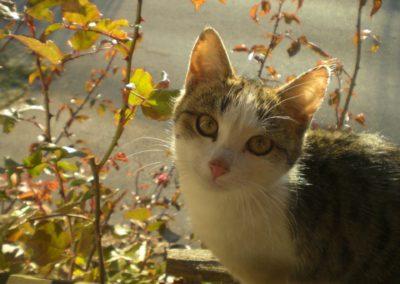 Katze im Gebüsch bei Urlaub am Bauernhof Grabenhofer